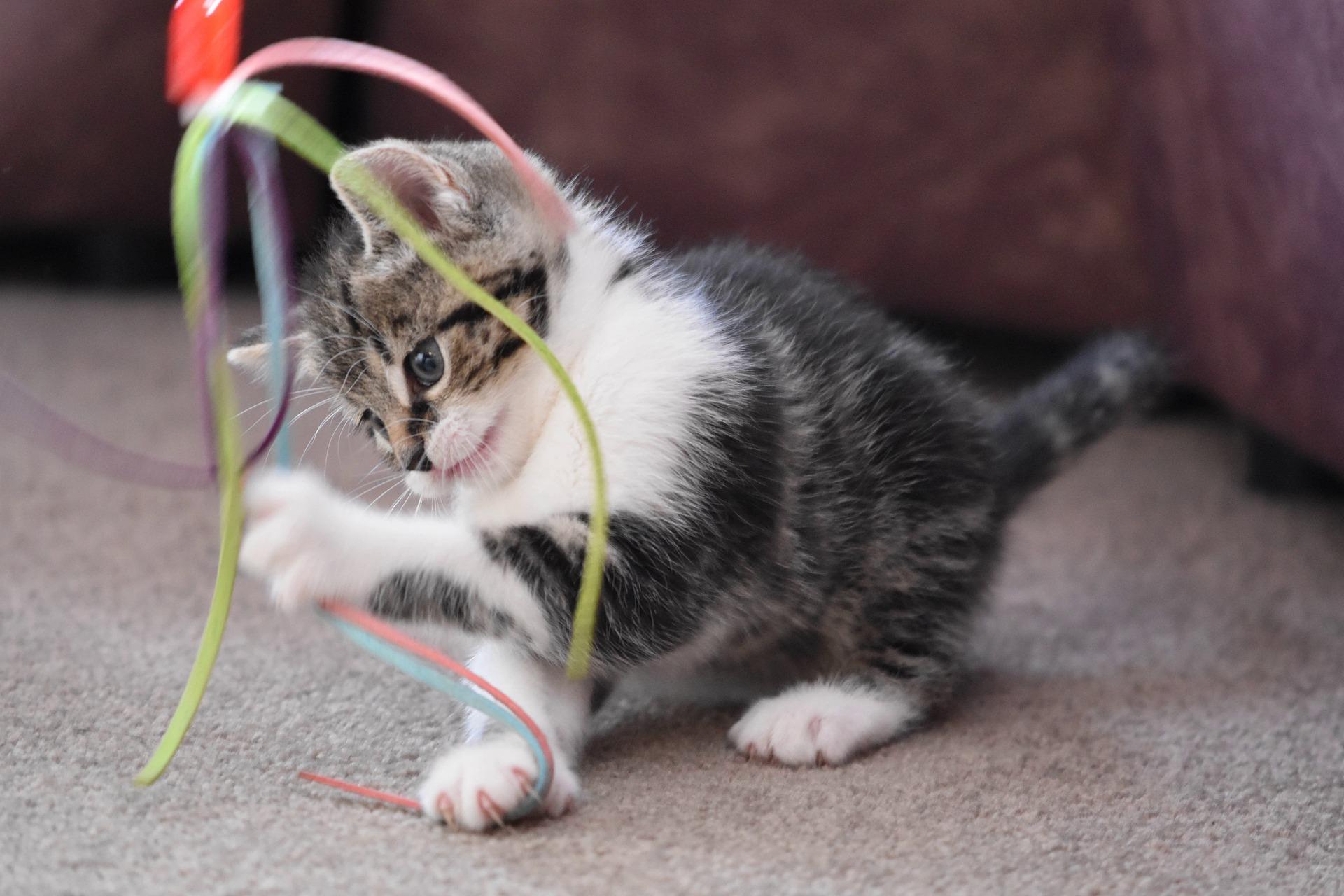 cat-4262737_1920